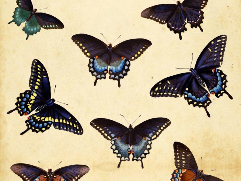 Naturen som et uerstatteligt kunstværk